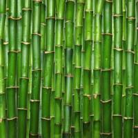 Sustain Bamboo Sound Diffusor